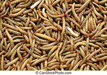 fresh mealworms food for animals as nice background
