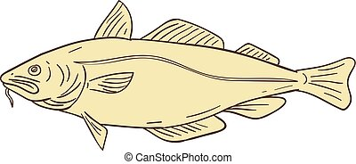 Atlantic Cod Fish Drawing - Drawing sketch style...