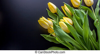 yellow tulips on a black background - bouquet of yellow...