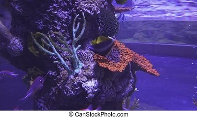 Beautiful saltwater aquarium corals and tropical fish stock...