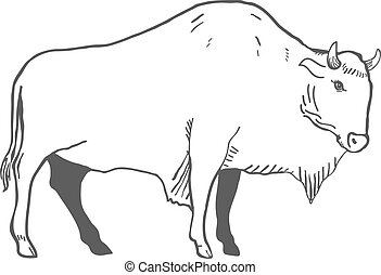 Hand Drawn Buffalo Illustration isolated on white. Vector...