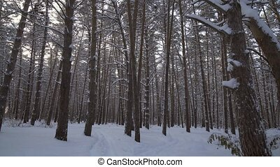 Travel through beautiful winter snow-covered forest stock...