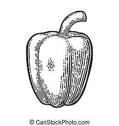 Sweet bell pepper. Vector vintage engraved illustration for...