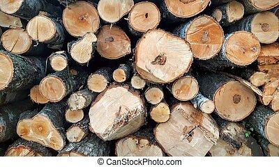 Tree trunks - Pile of tree trunks