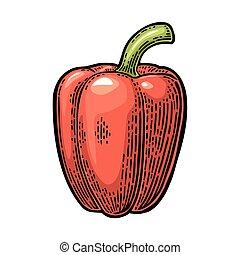 Sweet bell red pepper. Vector vintage engraved illustration...