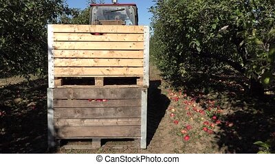 Tractor pick up wooden crates boxes full of apple fruits and...