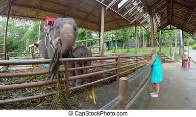 Woman looking at elephants on farm