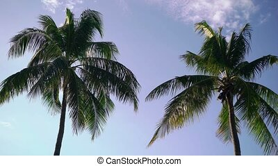 Two palms at sunny day - Two palm trees at sunny day