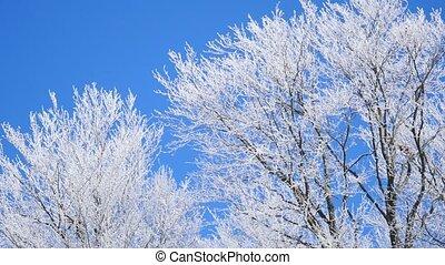 Frozen tree crown on blue sky background