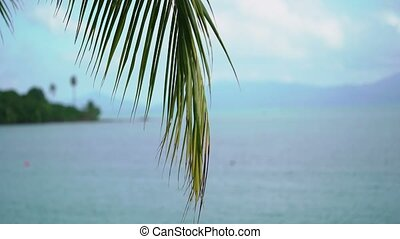 Palm on tropical beach