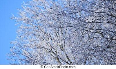Frozen tree crown on blue sky background.