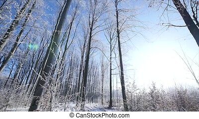 walk in frozen winter forest wide angle