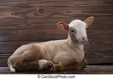 lamb - newborn lamb on a brown background