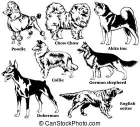 Set of Decorative Dog breeds vector illustration - Set of...