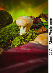 Wet mushroom puffball grows on green moss.