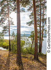 lakeside with tall pines - beautiful lakeside with tall...
