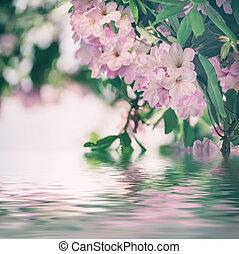 Rhododendron maximum pink flowers - Flowering of fresh...