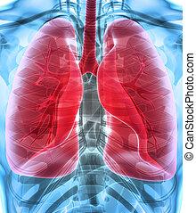 médico, Pulmones, concepto, Ilustración,  3D