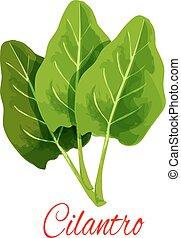 Cilantro herb or coriander plant spice vector icon