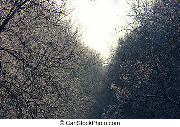 Winter forest. Trees in the snow