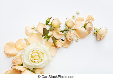 Roses on white background - Beautiful roses of tender colors...