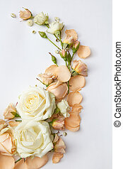 Roses on white background - Composition of white and orange...