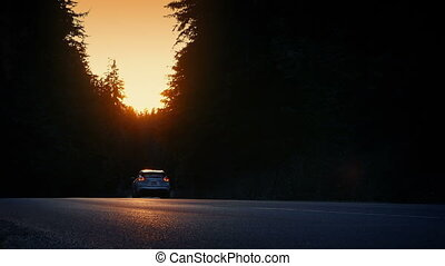 Cars Pass Through Evening Forest - Cars passing both ways on...