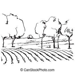 Vineyard landscape vector sketch design.