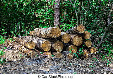 Lumber logs in the wood
