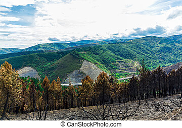 Burned forest in the mountains