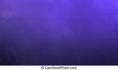 dense artificial fog covers plants near lake at night. -...