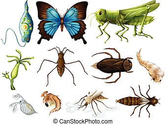 Different types of insects on white background illustration