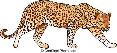 jaguar - Yellow-red spotted jaguar on a white background.