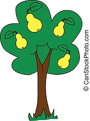 pear tree - The pear tree on a white background.