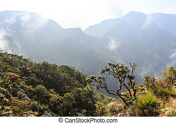 Scenic path in Horton Plains - Scenic view of tropical cloud...