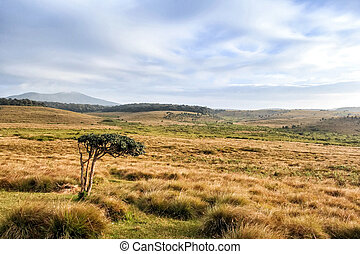 Scenic path in Horton Plains - Scenic view of savanna in...