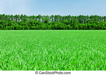 Green grass field and blue sky with forest