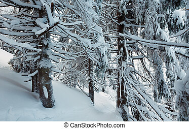 Winter mountain primeval forest. - Shadows in winter...