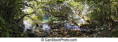 Wild forest on lake Leopoldsteiner in Styria, Austria