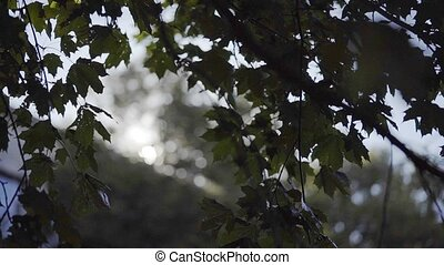 Tree branches and leaves backlight shot