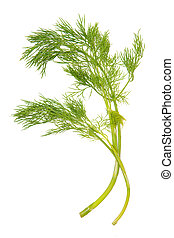 Green dill isolated on white