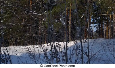 Videography winter forest from the window of a moving car or...