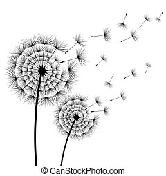 Two stylized flowers dandelions over white - Two beautiful...