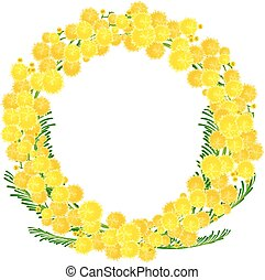 Wreath of yellow acacia flowers twigs. Isolated on white...