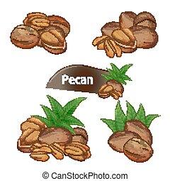 grano, hojas, Conjunto, pacana, cáscara de nuez