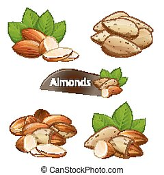 Almond kernel with green leaves set