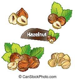 Hazelnut kernel with green leaves set - Hazelnut kernel with...