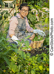 asian woman planting organic vegetable in home garden