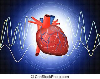 heart examination - illustration of heart examination