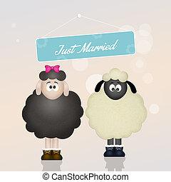 cute sheeps spouses - illustration of cute sheeps spouses